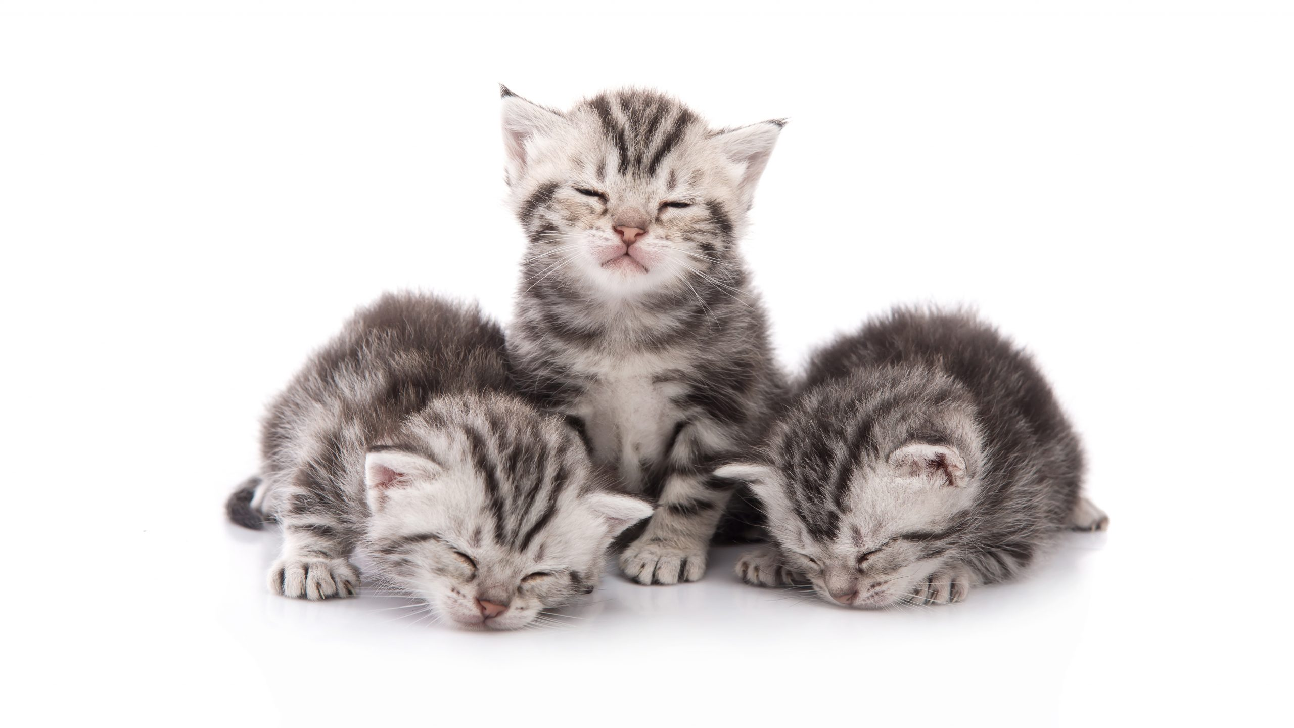 Found Cats And Kittens What Should I Do If I Find A Kitten S Younger Than 8 Weeks With Or Without A Mother In A Private Quiet Location Ten Lives
