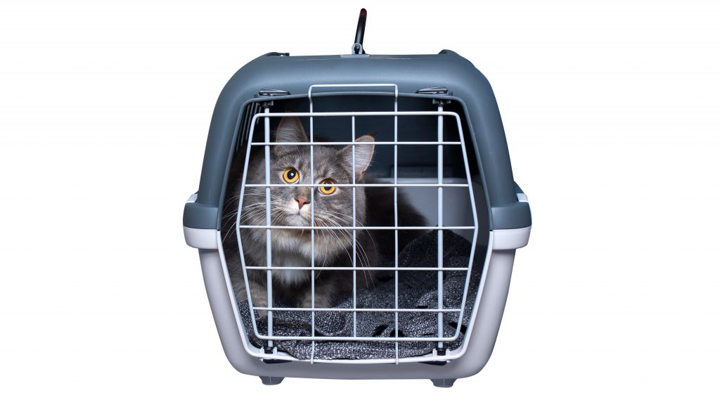 Cat in a carrier cage